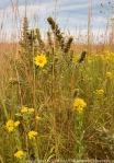 Restored prairie.  The Nature Conservancy's Platte River Prairies, Nebraska.