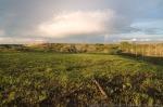 Burned prairie after rainstorm.  Griffith Prairie.  Hamilton County, Nebraska.