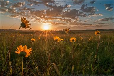 Sunrise in sand prairie.