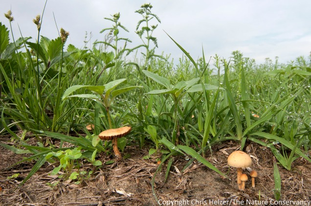 Now and then we get a look at soil fungi