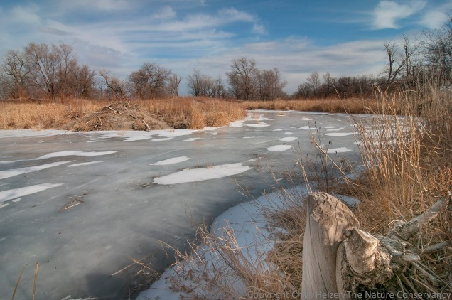 The beaver lodge is several hundred yards upstream of the main wetland area.