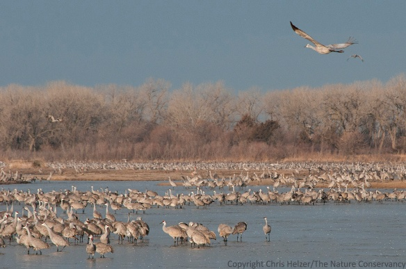 The early morning scene on the Platte River in March.  Note the abundance of feathers floating down the river...