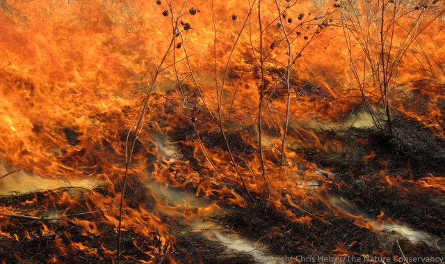 Fire is one of several major factors that propels change in prairies.