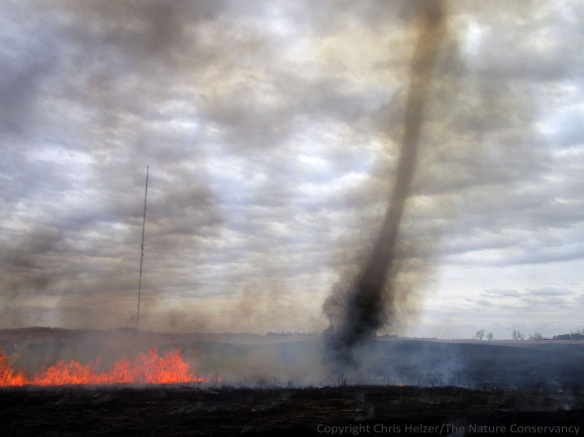Dust (ash?) devil during a prescribed fire.