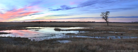 This photo shows a beautiful April sunset and a small group of deer stopping by the wetland.  Can you find all seven deer in the photo?  (You can click on the photo to get a closer look)