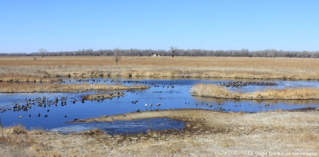 Three sandhill cranes stand in the middle of the wetland on March 8 of this year.
