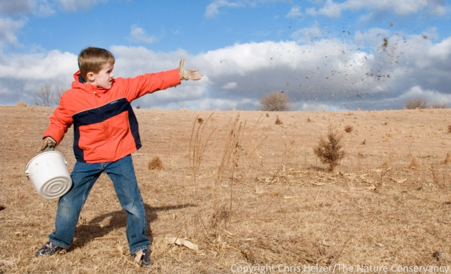 Here's Daniel, throwing seeds into an area that was grazed intensively the previous season.