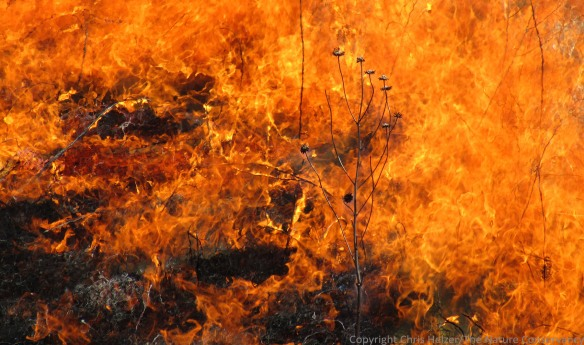 We still have a lot to learn about how fires affect the soil microbes in prairies.