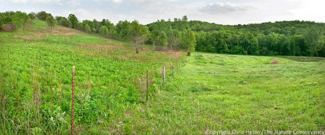 The prairie (left) and neighbor's pasture (right) shown in the earlier photo during the fire.  the prairie greened up very nicely, and the numerous dogwoods were knocked back (temporarily).