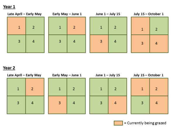 A graphical illustration of my grazing plan framework.  In Year 1, pastures 1 and 2 are grazed early to knock back brome.  Then pasture 3 is grazed for a month by until mid-July.  For the remainder of the season, cattle have access to three pastures, but continue to graze pasture 3 most intensively because of the attractive regrowth of the grasses there.  This creates a system fairly similar to a patch-burn grazing system, but uses a grazing enclosure, rather than fire, to create attractive forage and concentrate grazing.
