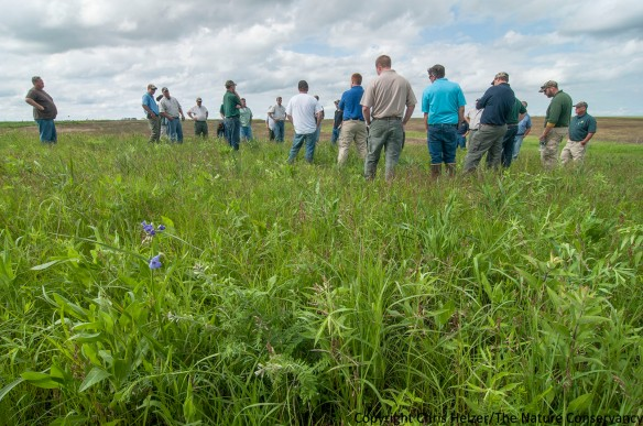 This seeded prairie has been part of a grazing system in every year since it was planted in 2003, and has maintained an excellent diversity of prairie plants.  Examples in the foreground include leadplant (Amorpha canescens).