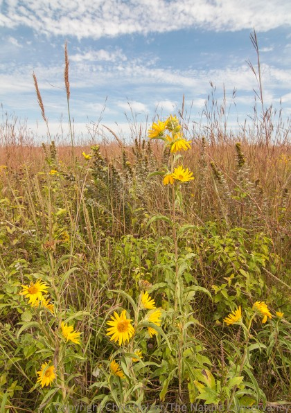 Late August is a great time to visit the Platte River Prairies - the grasslands are loaded with yellows and golds, accented with pinks and whites, and rich with texture.