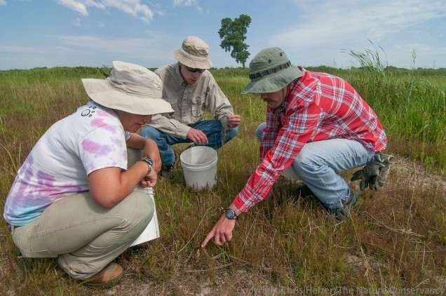 Jasmine and Dillon, along with intrepid volunteer, Sam Sommers (middle) work on some plant identification in the Platte River Prairies.