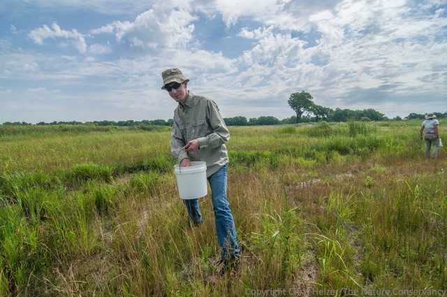 Here is Sam harvesting seeds along a restored Platte River wetland this summer.