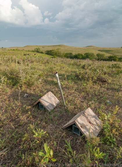 Sherman live traps laid out in a grazed portion of the prairie.