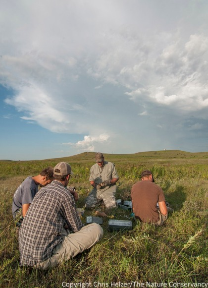 The crew watches Drew and his assistant, Kyle (right) examine and record data from captured small mammals.