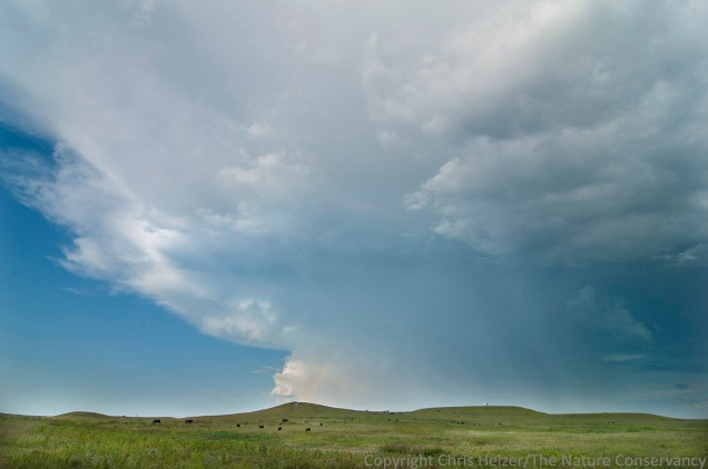 Earth, sky, and grass at Konza Prairie.