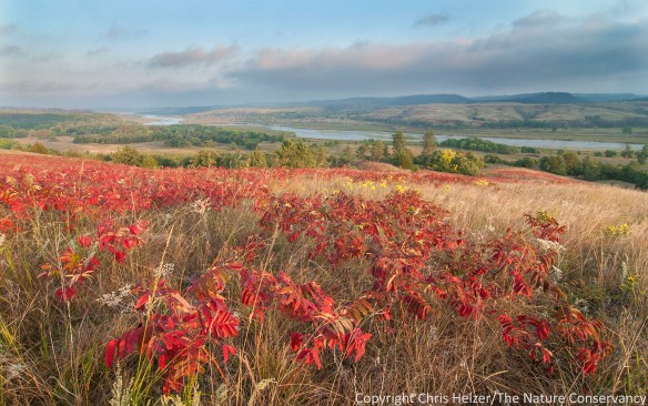 Smooth sumac and prairie along the Niobrara River at The Nature Conservancy's Niobrara Valley Preserve.