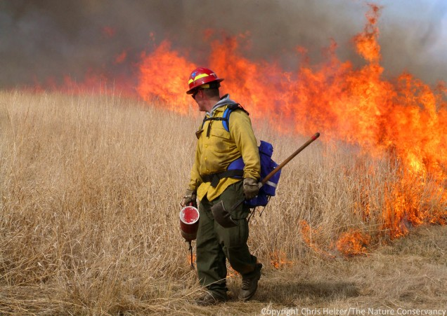 Prescribed burning is an important management tool, but its impacts on prairie communities can be complicated.