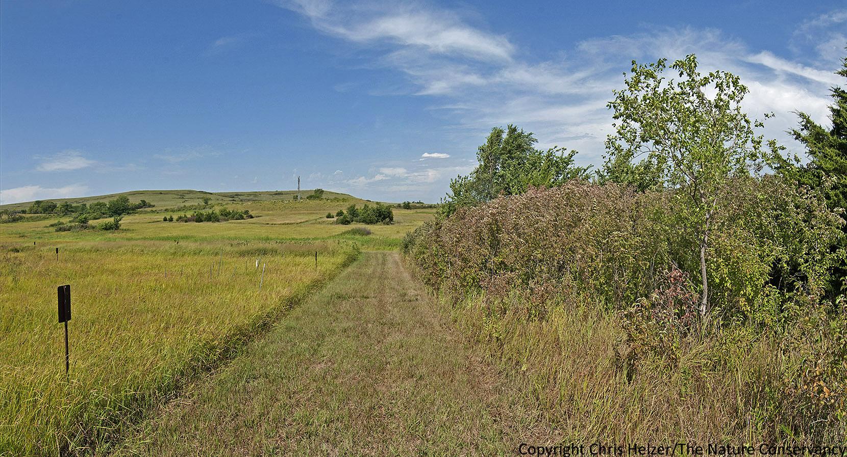 biome grasslands essay