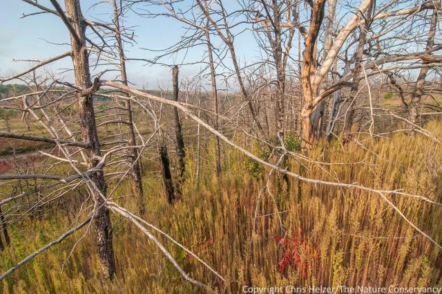 Marestail and cedar skeletons
