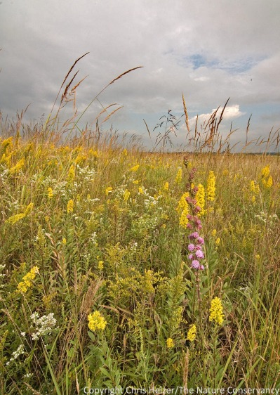 Color is easy to find in many prairies.  Wildflowers are an obvious source of color, but not the only one.