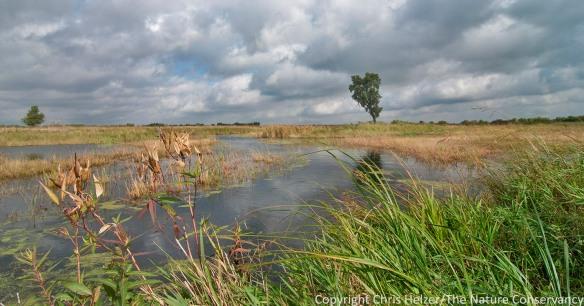 The Derr Sandpit wetland (2013 photo).  The Nature Conservancy's Platte River Prairies, Nebraska.