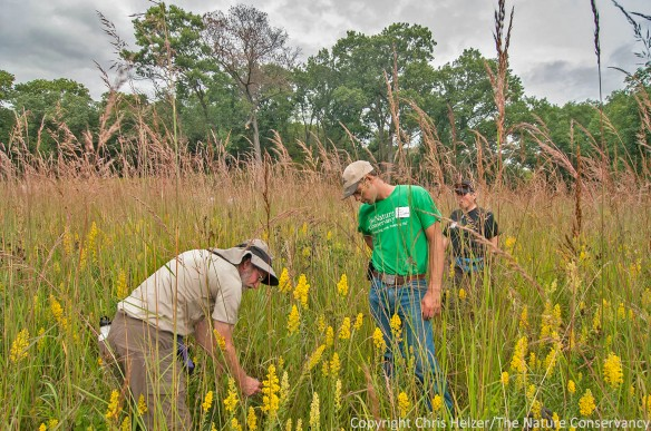 James Trager (Shaw Nature Reserve) and Nelson Winkel (TNC Platte River Prairies) look over a restored prairie at Nachusa Grasslands.  This prairie was relatively unique in that it had a fair amount of indiangrass in it.  Most of the seed mixtures have none, or very little, seed from big grasses such as indiangrass and big bluestem.