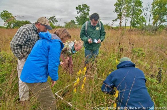 """Bill (left) oversees some """"data collection"""" during this year's Grassland Restoration Network, which was done to help tour participants evaluate an overseeding project.  Becky and Hank Hartman (volunteer stewards) have used repeated overseeding to transform an area from exclusively grasses to one with very nice wildflower diversity."""