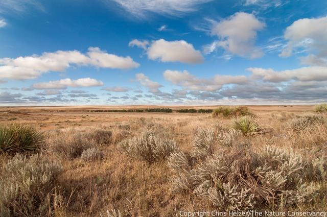 Sandsage prairie.