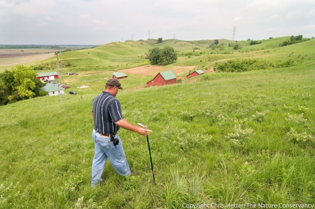 Walking around a prairie and getting a read on what's happening is probably the most important part of prairie management.  This is Scott Moats, The Nature Conservancy's Broken Kettle Grasslands, Iowa.