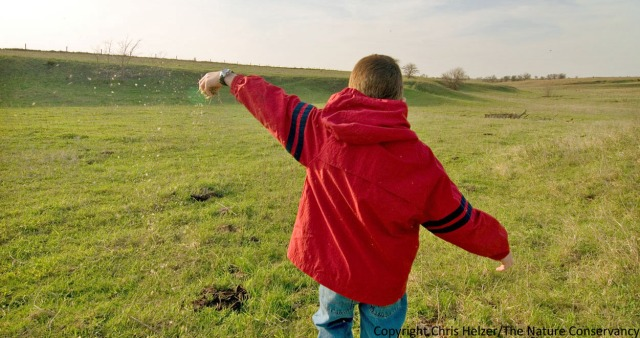 I hope that helping me harvest and plant seeds at our family prairie will help my kids develop a love for grasslands.