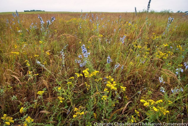 Our restored prairies can be very beautiful.