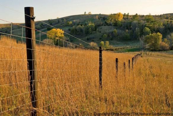 Bison fence at The Nature Conservancy's Broken Kettle Grasslands in Iowa.
