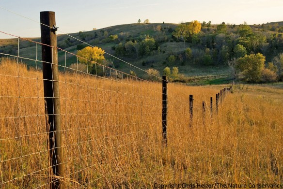 Bison fence at The Nature Conservancy's Broken Kettle Grasslands in Iowa.