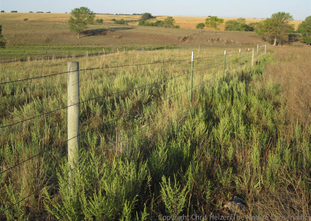 Hubbard fellowship blog the trouble with fences the prairie ecologist - Most frequent fence materials ...