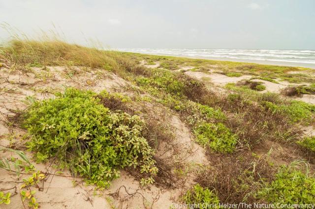 Padre Island National Seashore.  Corpus Christi, Texas.
