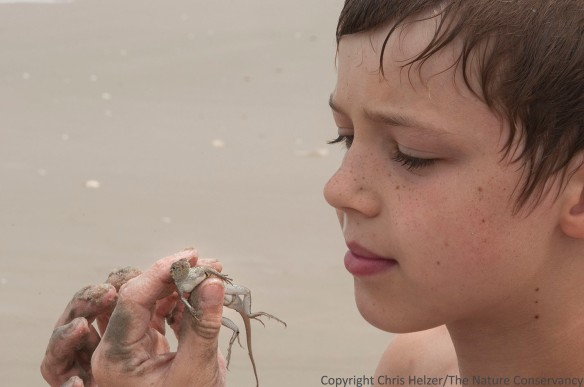 Atticus Miller (stepson of photographer) looking at a lizard found on the beach.  San Jose Island.  Gulf of Mexico.  Port Aransas, Texas.