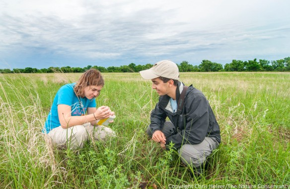 Kim Tri inspects a skunk skull in the prairie while Evan Barrientos looks on.  The Nature Conservancy's Platte River Prairies, Nebraska.
