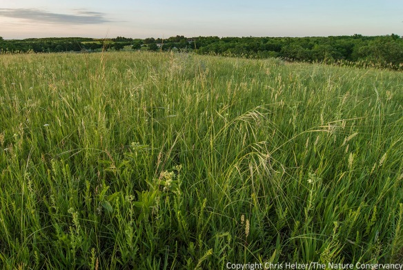 What would this prairie look like through the eyes of a tiny bee trying to find food for itself and its eggs?