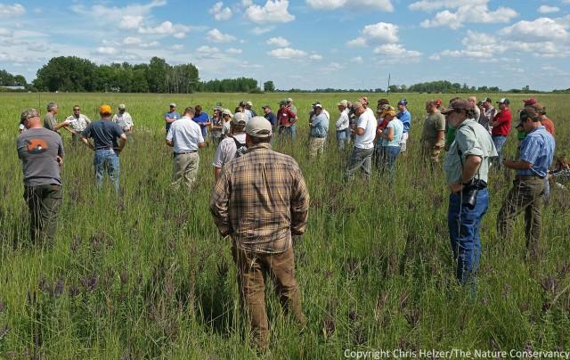 Grassland Restoration Network tour.  TNC Bluestem Prairie, Minnesota.
