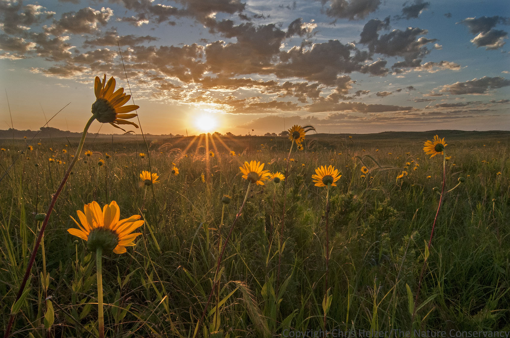 Photo Of The Week August 6 2015 The Prairie Ecologist