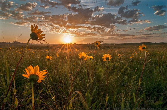 Sunrise in sand prairie.  TNC Platte River Prairies, Nebraska.