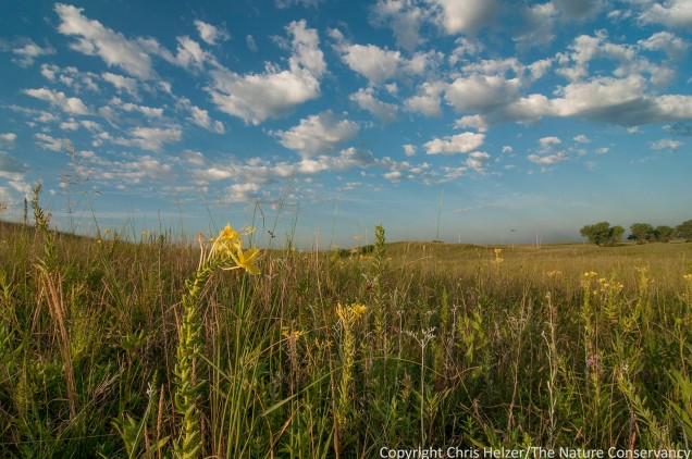 Our Platte River Prairies are beautiful and full of life right now.  Field Days are a great time to learn more about what's living in those prairies as well as the management and restoration strategies we use to keep them vibrant and healthy.