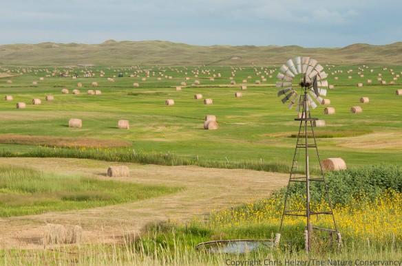 Windmill and hay bales. Nebraska Sandhills in Cherry County.