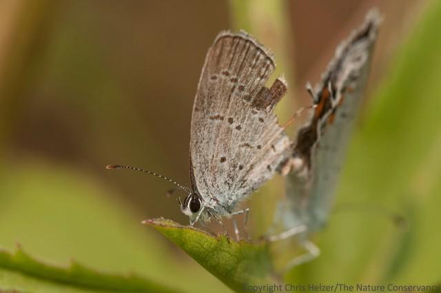 Butterflies. Deep Well Wildlife Management Area.