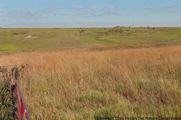 Helzer prairie grazing. Pasture #2 se of water tank