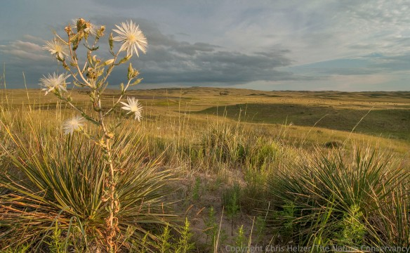 We can learn a lot by studying how species do in the core versus the ragged edges of huge intact prairie landscapes like the Nebraska Sandhills.