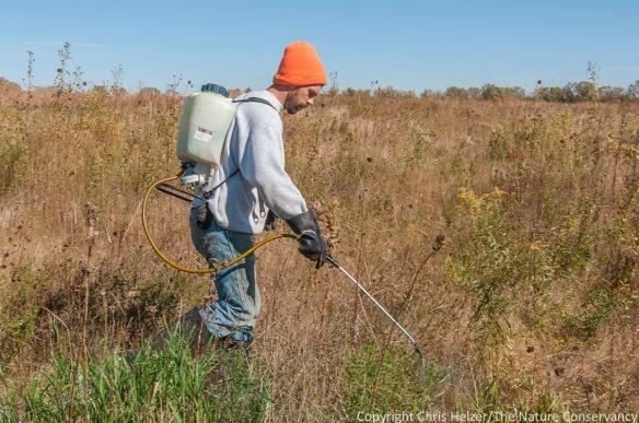 Nelson Winkel sprays reed canarygrass at TNC Nebraska's Platte River Prairies.