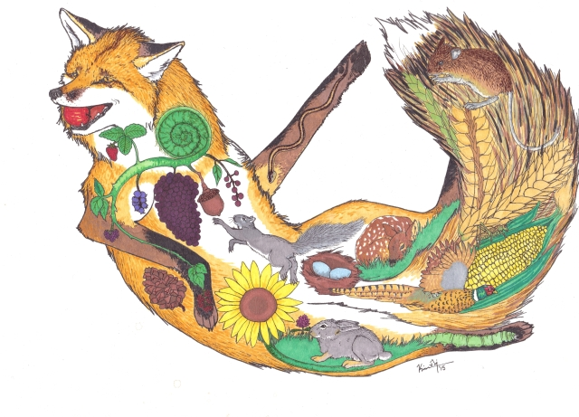 A drawing inspired by the indiscriminate dietary habits of foxes. Everything inside of the fox itself are things that they will eat if they can get them. Marker drawing by Kim Tri.